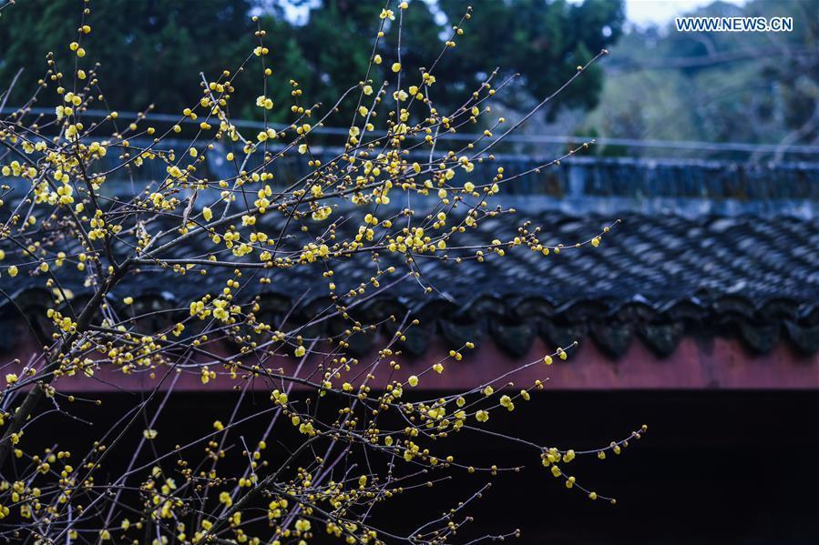CHINA-HANGZHOU-WINTER BLOSSOMS (CN)