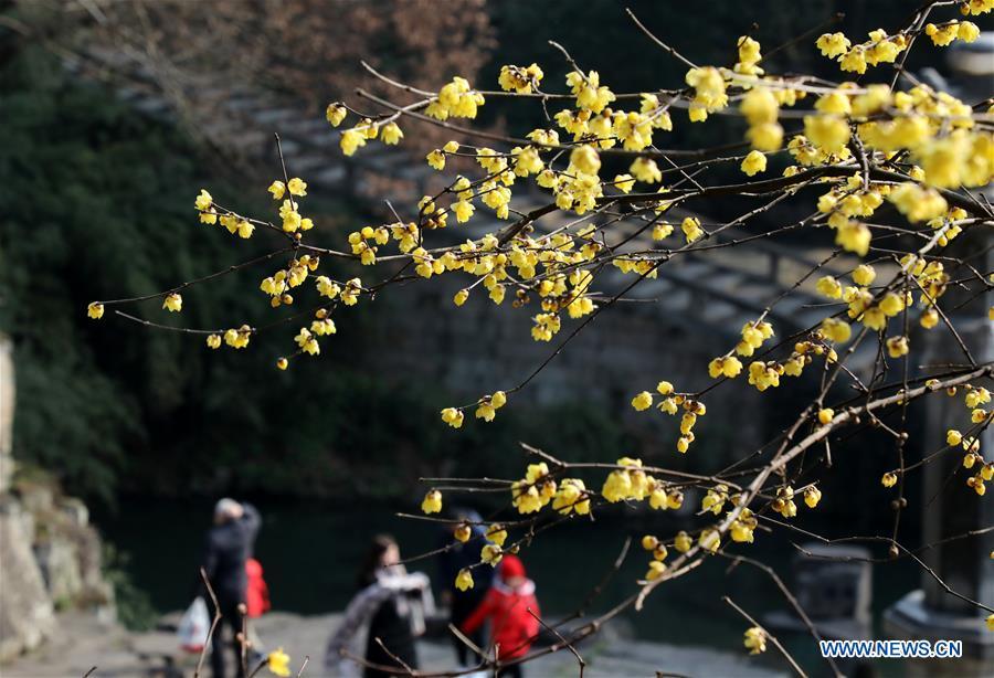 #CHINA-WINTER-FLOWERS (CN)