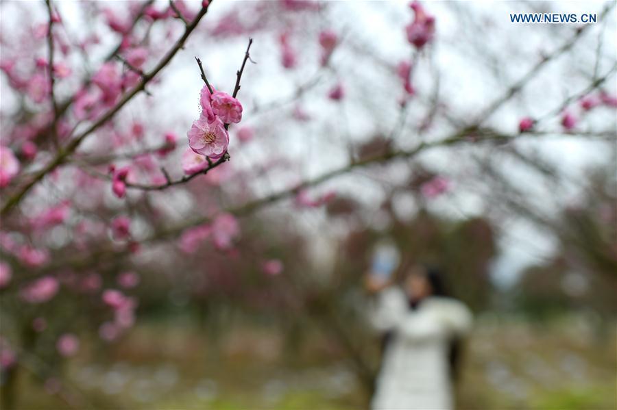 # CHINA-DAHAN-SOLAR TERM-WINTER BLOSSOMS (CN)