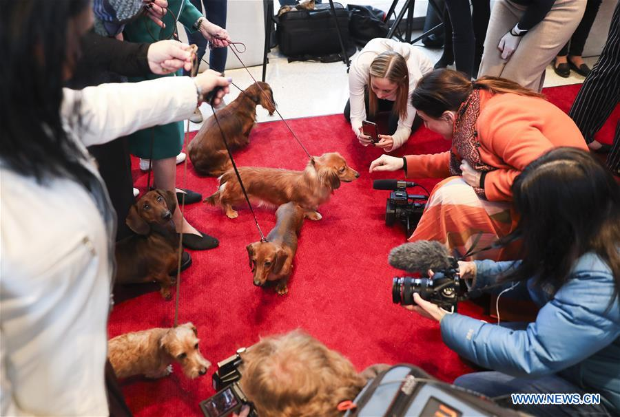 Annual Westminster Kennel Club Dog Show to be held on Feb