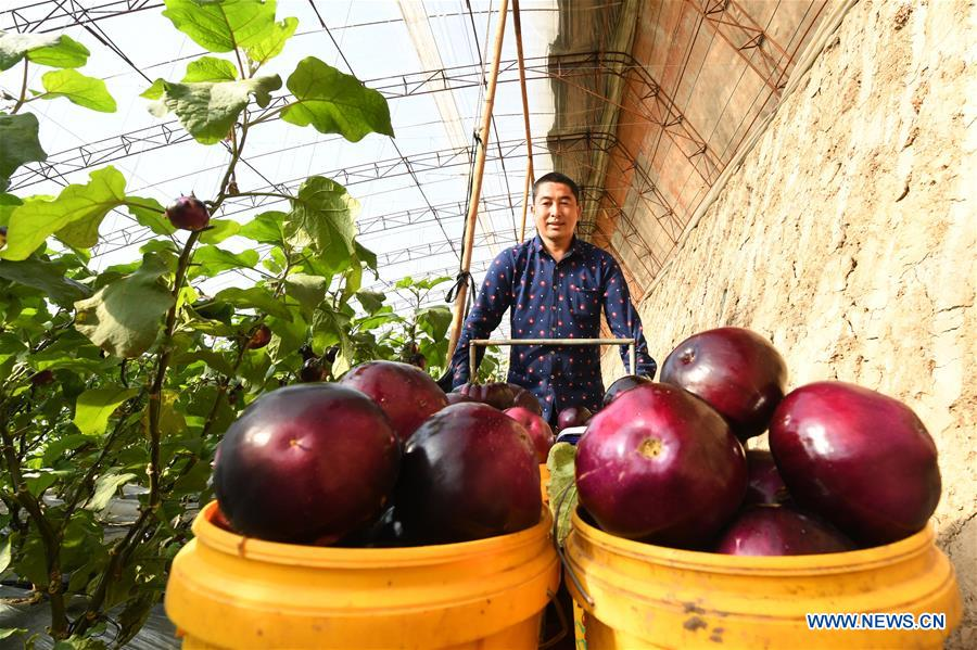 CHINA-HEBEI-LAOTING-VEGETABLES (CN)