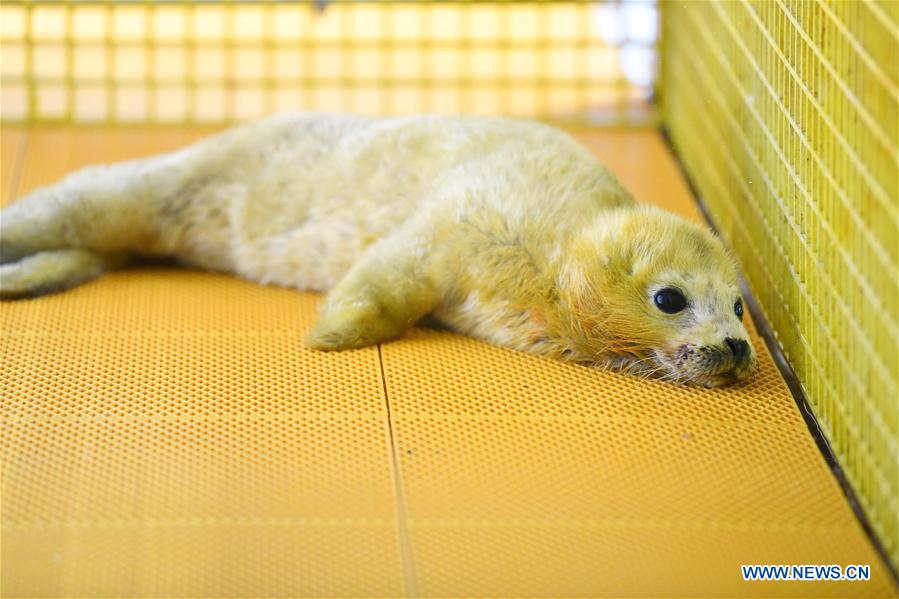 CHINA-HARBIN-SEAL CUB (CN)