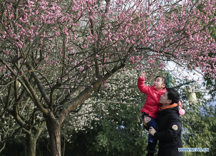 #CHINA-PLUM FLOWERS (CN)