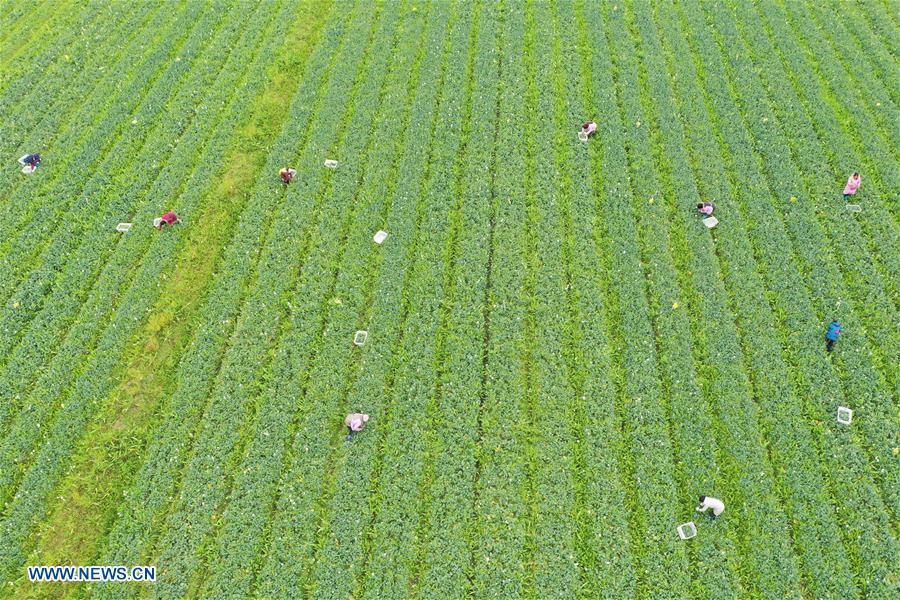#CHINA-FARM WORK (CN)