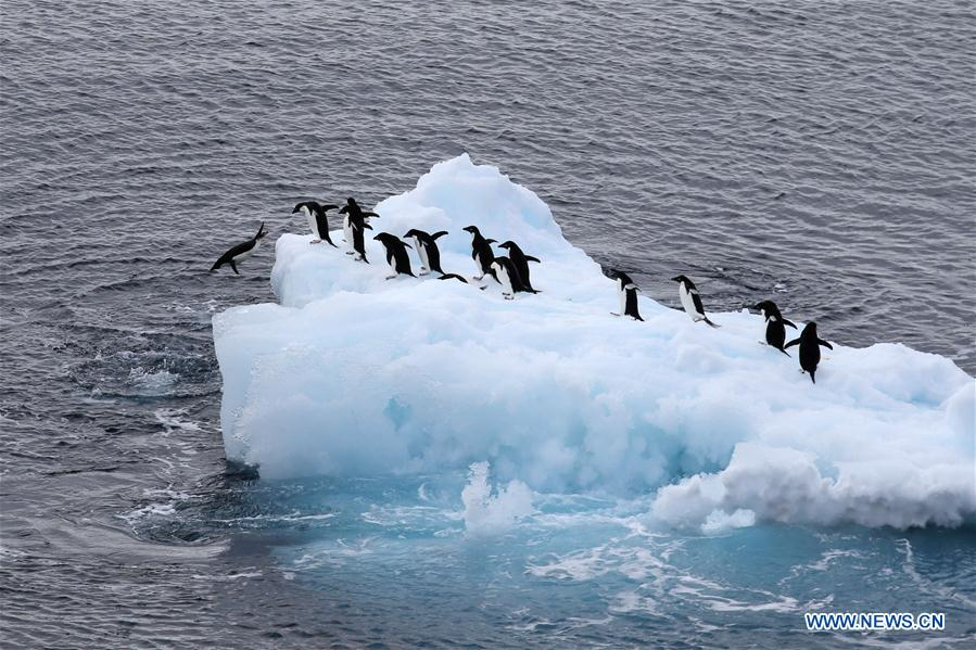 ANTARCTICA-CHINA-XUELONG-ANIMAL (CN)