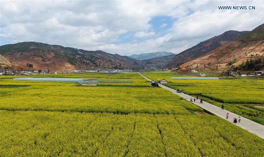 CHINA-SICHUAN-MIYI COUNTY-COLE FLOWERS (CN)