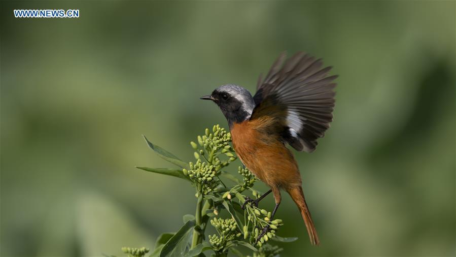 CHINA-FUJIAN-BIRDS (CN)
