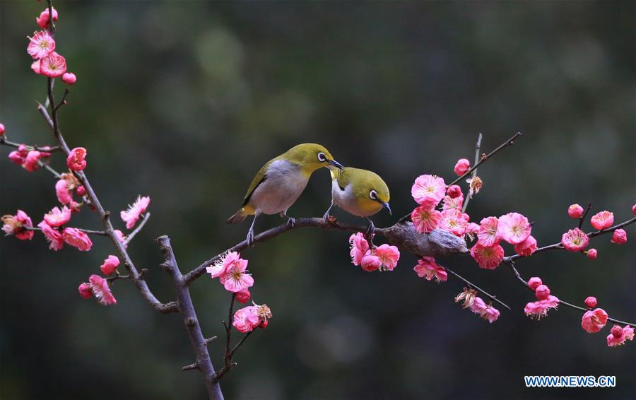 #CHINA-HUNAN-HENGYANG-BIRD-PLUM BLOSSOM (CN)