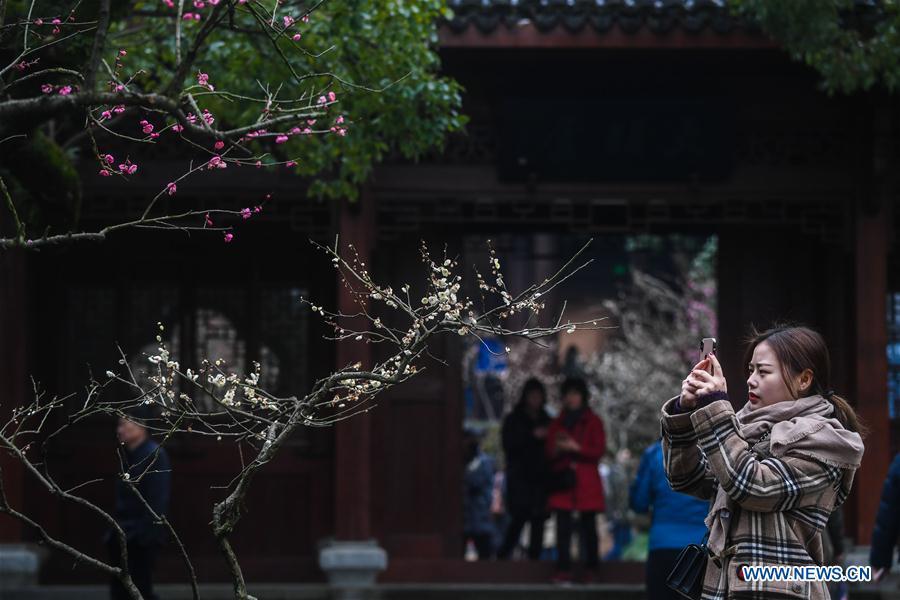 CHINA-ZHEJIANG-SPRING-PLUM BLOSSOM(CN)