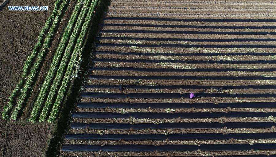 #CHINA-SPRING-AGRICULTURE (CN)