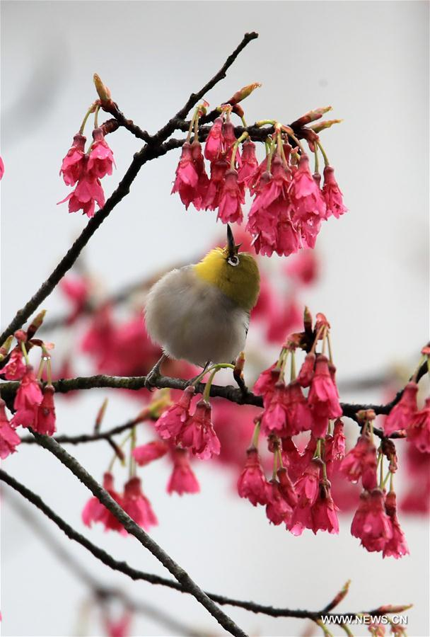 #CHINA-SPRING-SCENERY-BIRDS AND FLOWERS (CN)