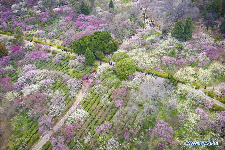 #CHINA-JIANGSU-NANJING-SPRING-FLOWERS (CN)