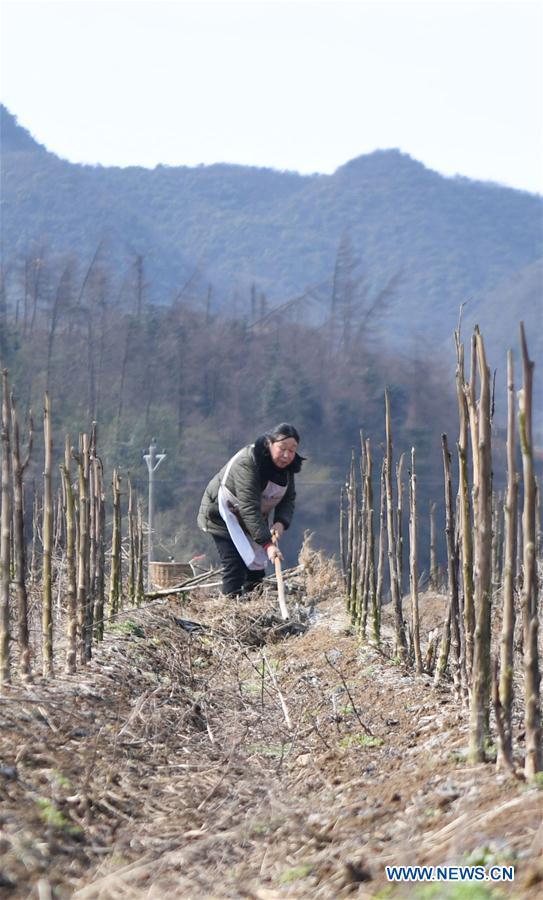 CHINA-HUNAN-FARM WORK (CN)