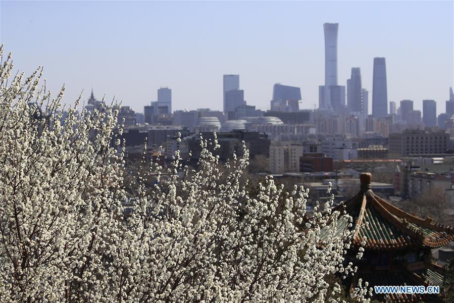 #CHINA-BEIJING-PEACH BLOSSOMS(CN)