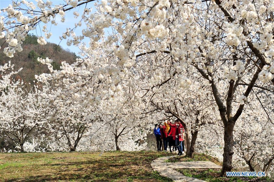 CHINA-SPRING-FLOWERS (CN)