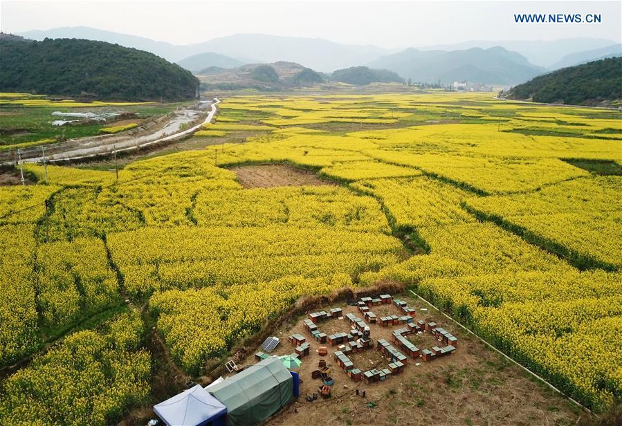 CHINA-GUIZHOU-LIPING-HONEY-BEE-FARMING (CN)