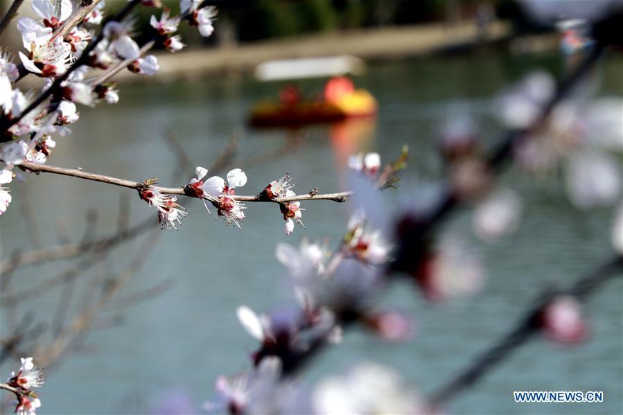# CHINA-SPRING-SCENERY (CN)