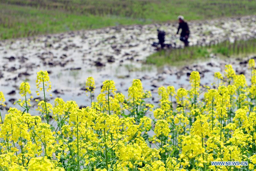 #CHINA-HUNAN-SPRING-FARMING (CN)