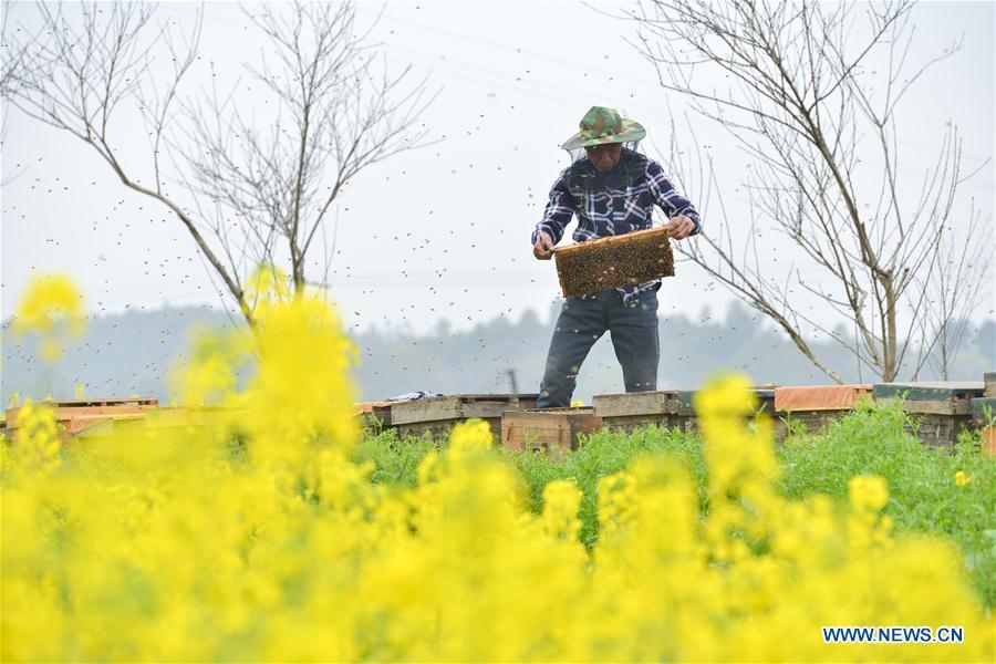 #CHINA-HUNAN-SPRING-BEE FARM (CN)