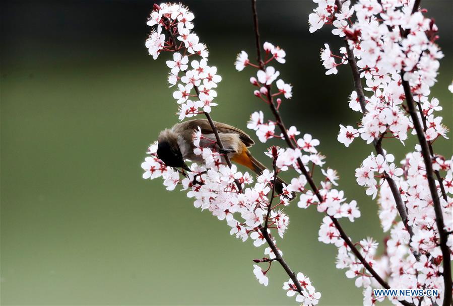 #CHINA-GUIZHOU-SPRING-BIRD (CN)