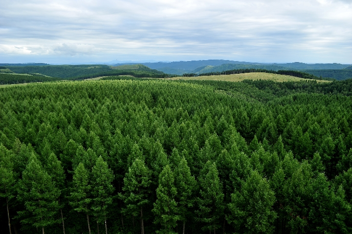 Commentary: China leads world in reforestation efforts - Xinhua