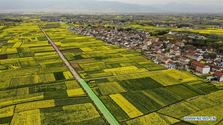 CHINA-SHAANXI-SPRING-COLE FLOWERS (CN)