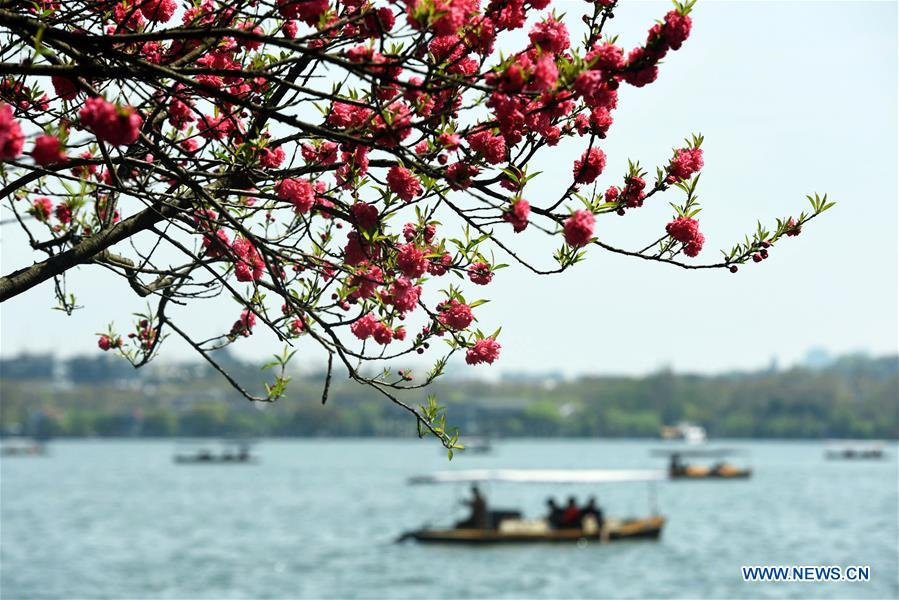 #CHINA-SPRING-LEISURE-FLOWER (CN)