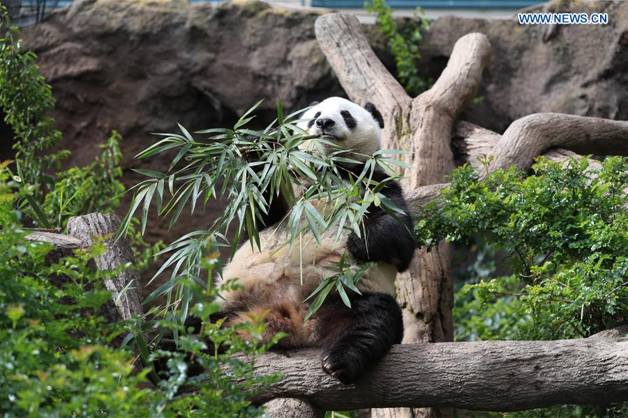San Diego Zoo holds farewell party for giant pandas - Xinhua