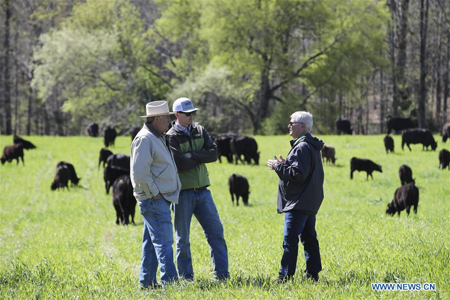 Xinhua Headlines: American cattle farmers eager to sell quality beef to China