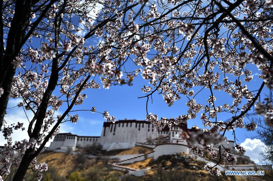 CHINA-LHASA-SPRING (CN)