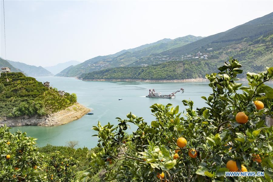 #CHINA-HUBEI-ZIGUI-NAVEL ORANGE (CN)