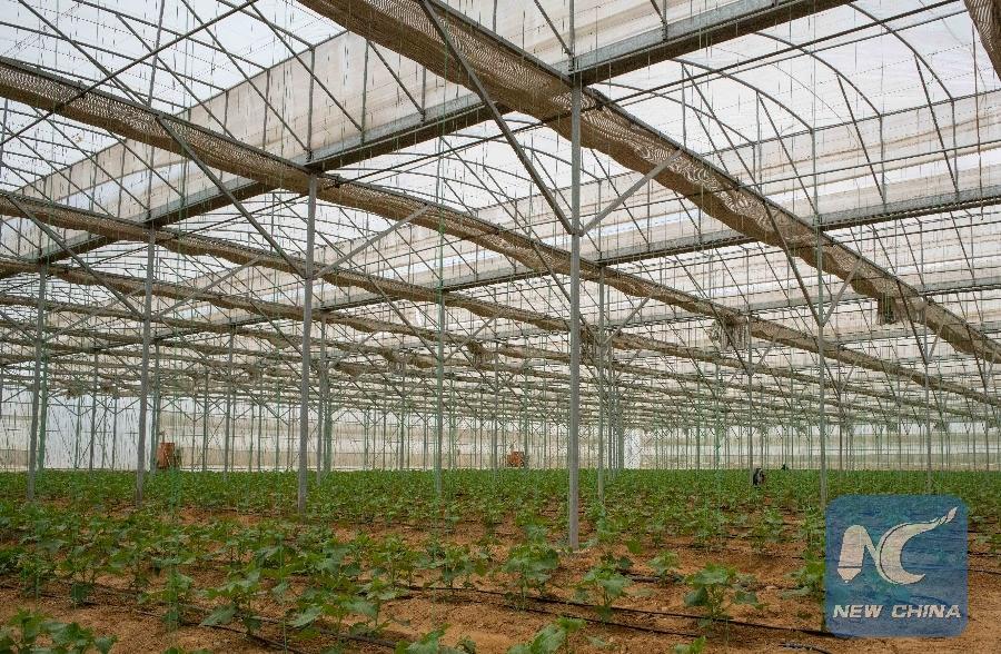 Sensational Feature Chinas Greenhouse Technologies Turn Egypts Desert Home Interior And Landscaping Oversignezvosmurscom