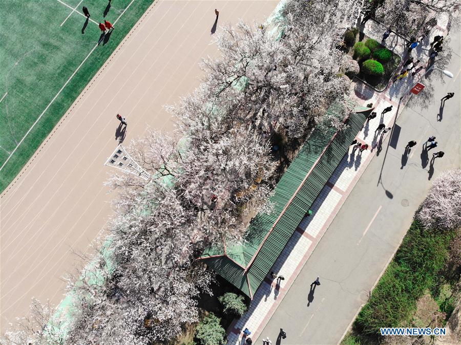 CHINA-HARBIN-APRICOT FLOWERS (CN)