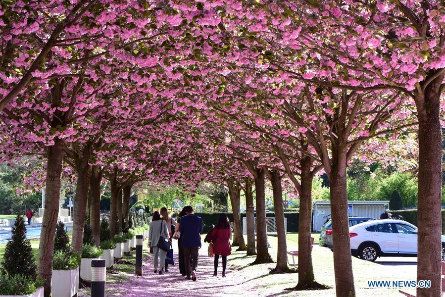 SWITZERLAND-GENEVA-FLOWERS