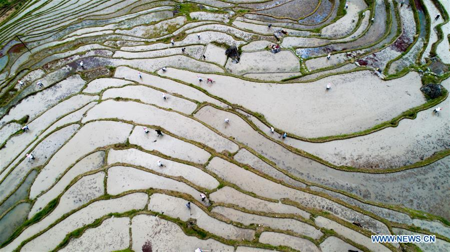 #CHINA-GUANGXI-TERRACED FIELD-FARMING (CN)