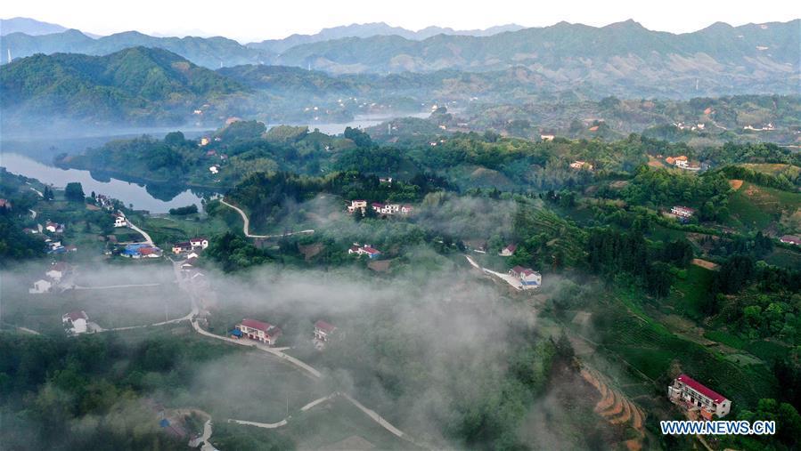 CHINA-ANHUI-LU'AN-TEA GARDEN-SCENERY (CN)