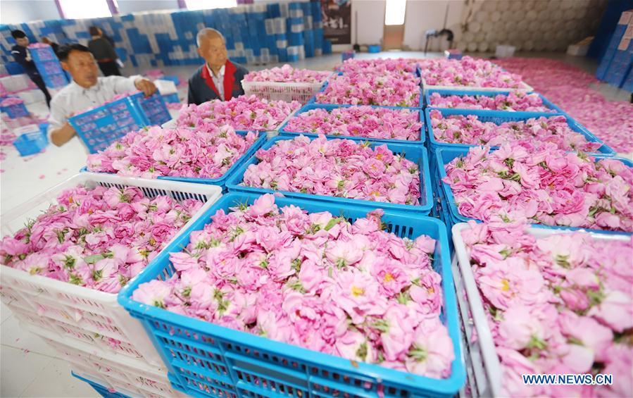 #CHINA-JIANGSU-HAIAN-ROSE ECONOMY (CN)