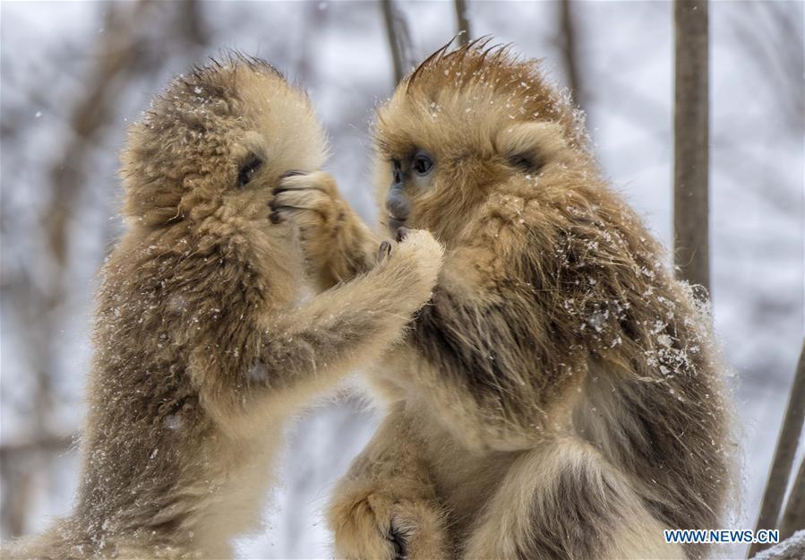 中国中部湖北神农架国家公园的风景