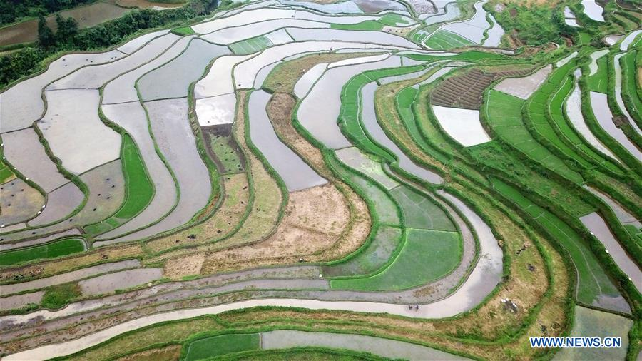 CHINA-GUIZHOU-DANZHAI-TERRACED FIELDS (CN)