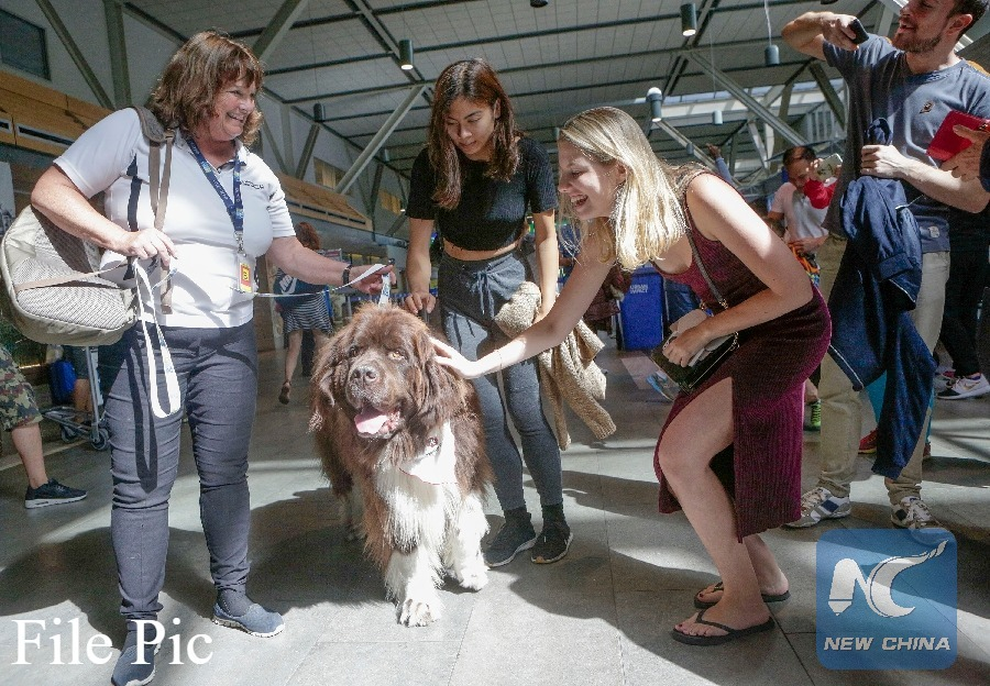 Israel to set up pet terminal at Ben Gurion Airport