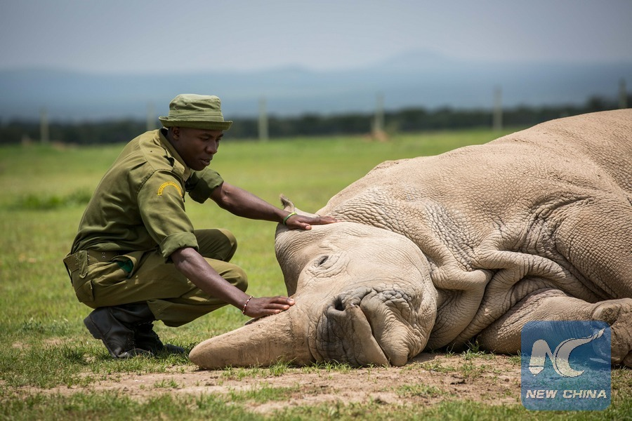 Northern white rhino can be saved from extinction scientifically: expert
