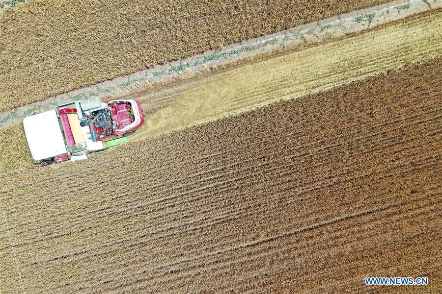 #CHINA-SUMMER-FARM WORK (CN)