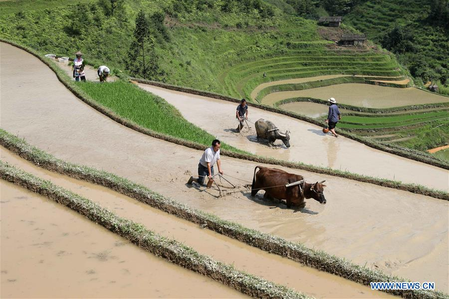 #CHINA-SUMMER-FARM WORK (CN)