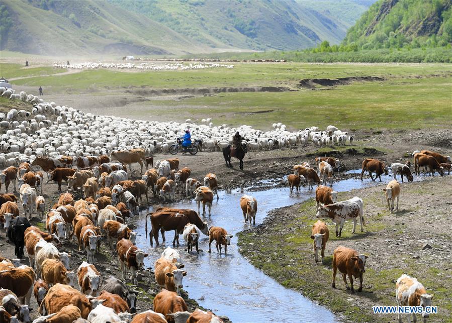 CHINA-INNER MOGOLIA-CHIFENG-AR HORQIN GRASSLAND-LANDSCAPE (CN)