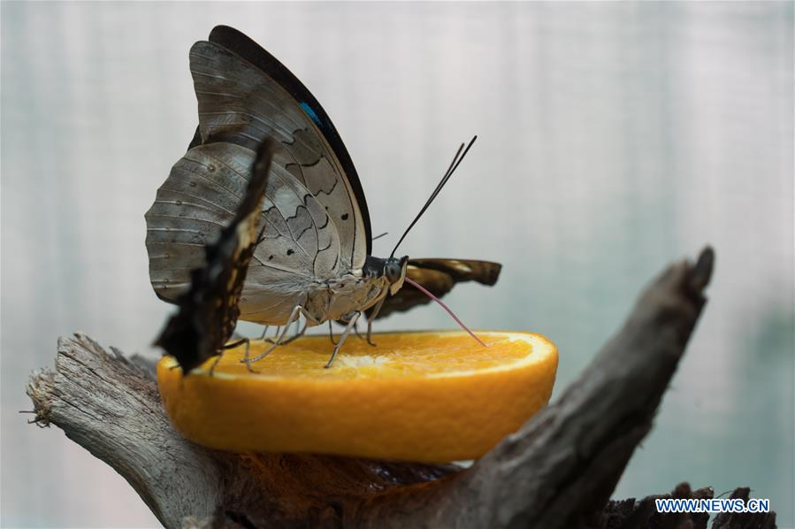 HUNGARY-BUDAPEST-ZOO-BUTTERFLY