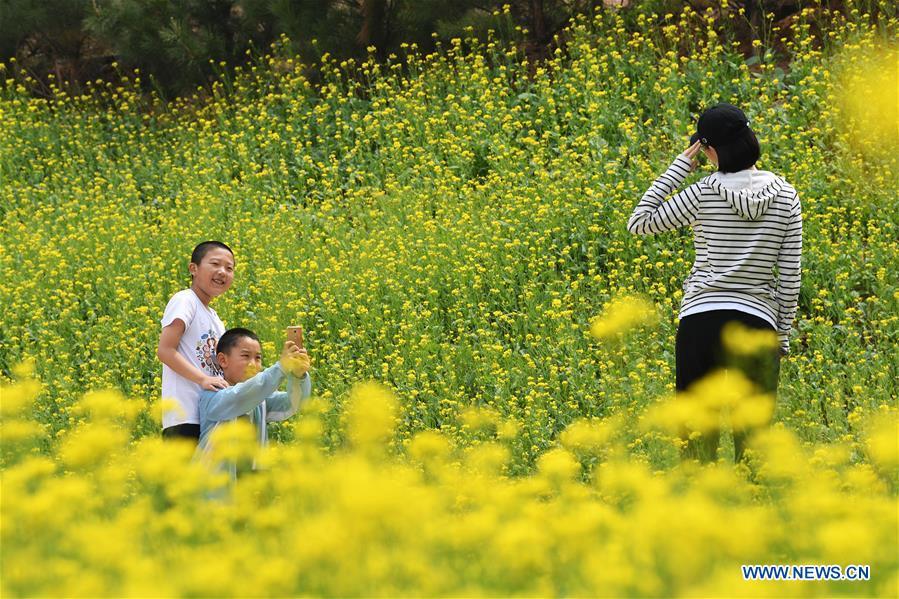 CHINA-SHANXI-TAIYUAN-COLE FLOWERS (CN)