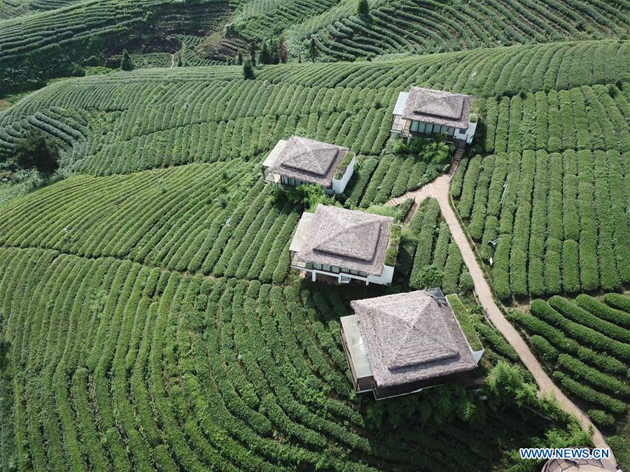 CHINA-GUIZHOU-DUSHAN-TEA GARDEN (CN)