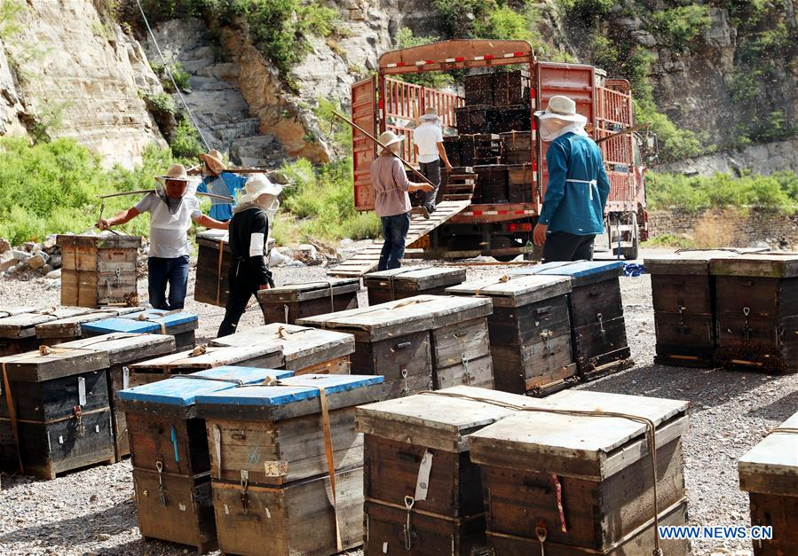 #CHINA-HEBEI-SHIJIAZHUANG-HONEY COLLECTING (CN)