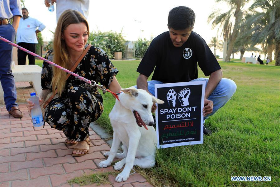 科威特 - 科威特城市 - 集体动物 - 动物保护