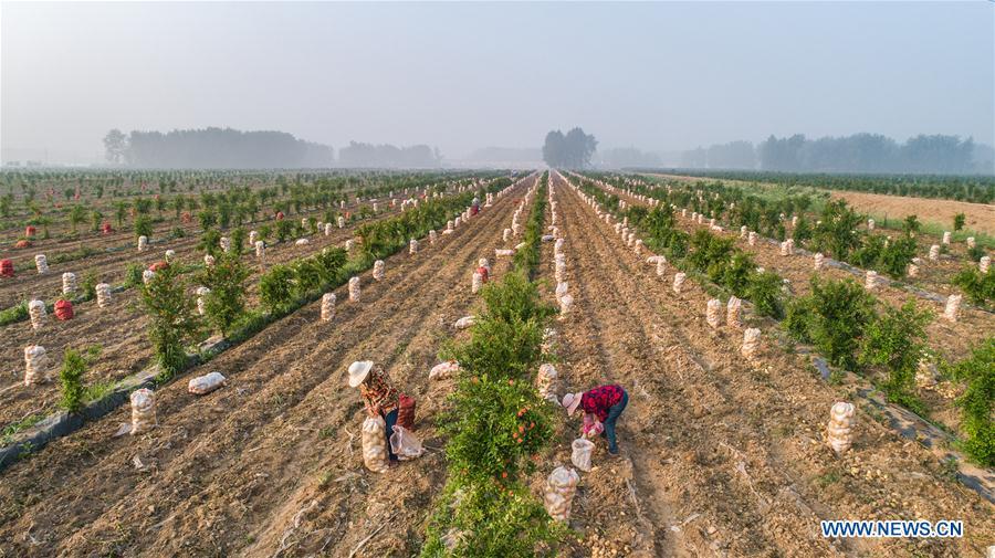 #CHINA-SUMMER-FARMING(CN)